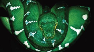 Meet the Snake